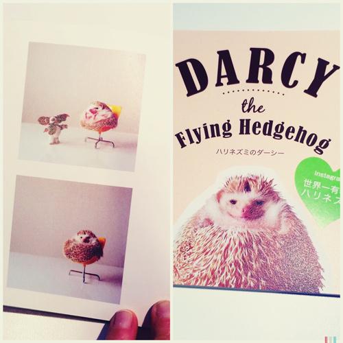 fairylikes-darcy