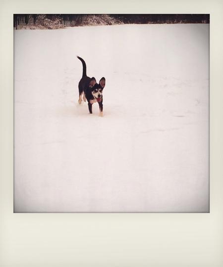 fairylikes-schneehund