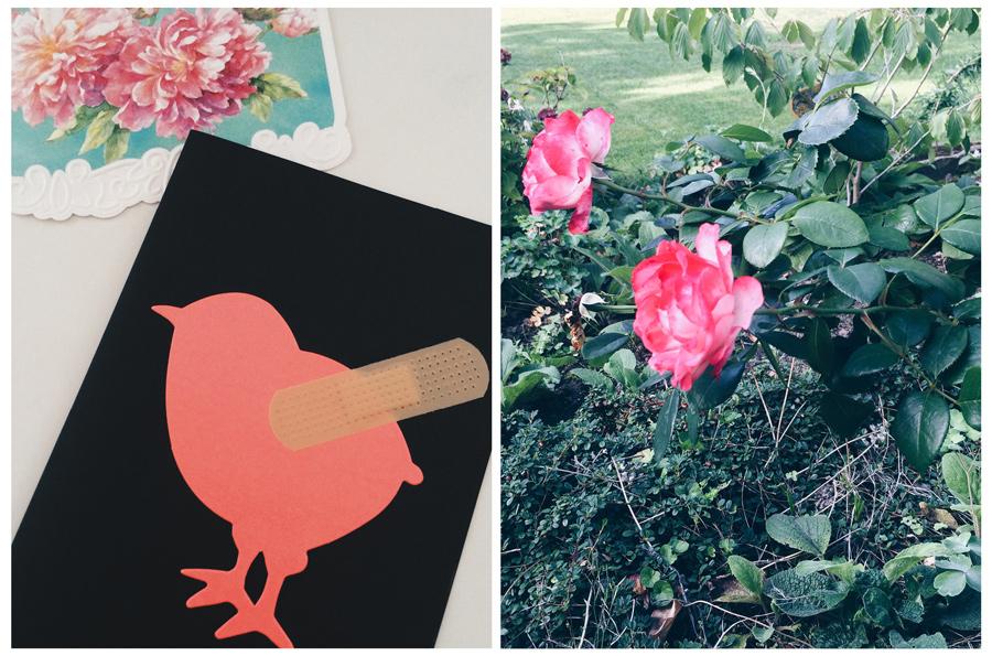 Bild von zwei Grußkarten, davon eine mit einem Vogel, der ein Pflaster am Flügel hat, und von zwei auggegangenen Rosen