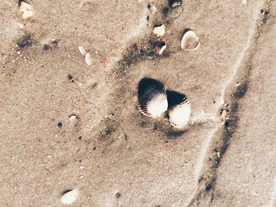 zwei Muscheln nah aneinander