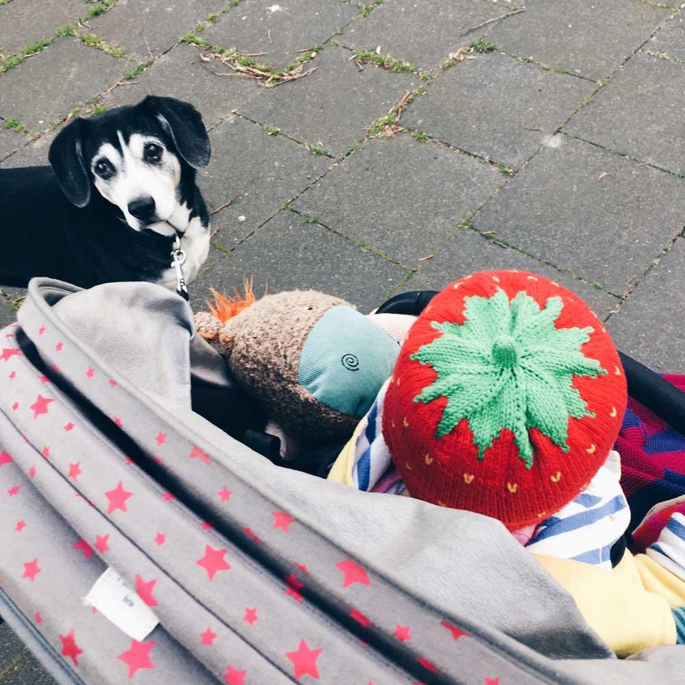Kind mit Erdbeermütze im Kinderwagen, Hund daneben